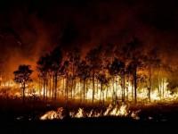 Особый противопожарный режим установлен в Республике Алтай