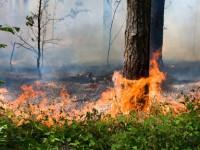 Особый противопожарный режим действует в Республике Алтай