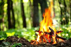 В Республике Алтай вводится особый противопожарный режим