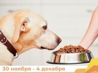 «Мы вместе. Для каждого»: в Республике Алтай организован сбор корма для бездомных животных